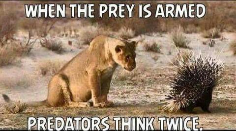 predators-think-twice