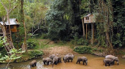 wild-elephant-valley