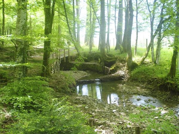 montedimezzo-forest-reserve-2