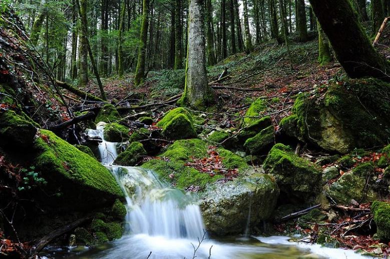 montedimezzo-forest-reserve